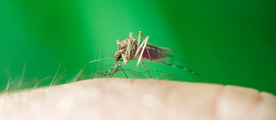 3 Ways To Avoid Mosquito Bites When Outside In The Summer